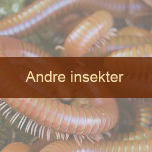 Andre insekter